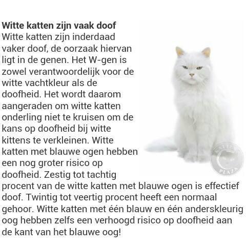 doofheid-bij-witte-katten